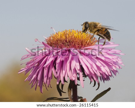 bee on the flower