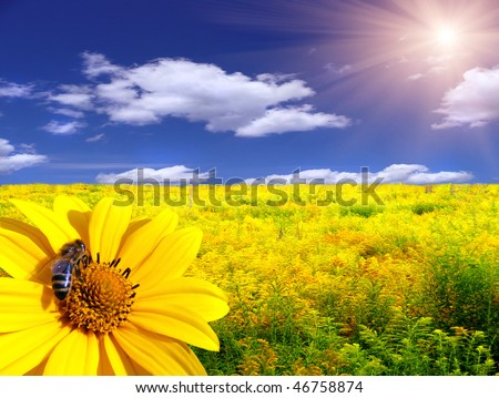 Bee on the flower in the yellow meadow