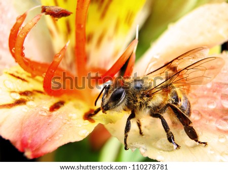 Bee Pollinating a Brightly Coloured Flower