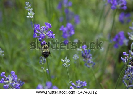 Bee pollinating in a flower garden