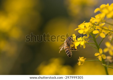 Bee sitting on a yellow flower ez canvas bee sitting on a yellow flower mightylinksfo