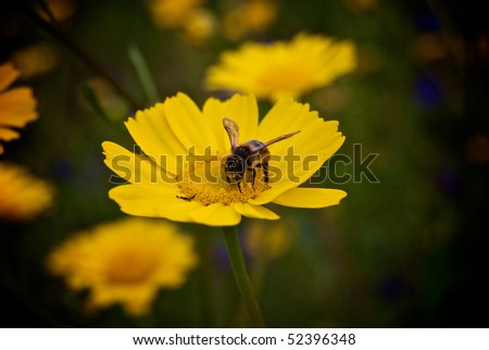 Bee upon a flower