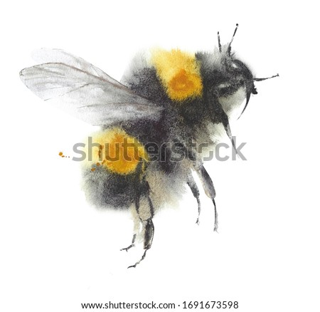 Bee watercolor painting illustration isolated on white background insect bumblebee