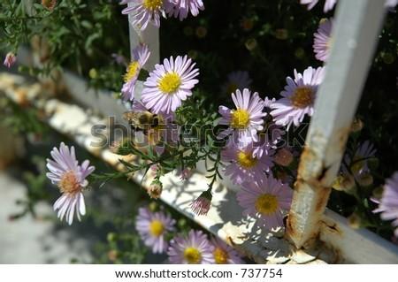 Bee with nice flowers!