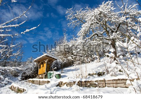 bee yard in fresh snow between trees hillside in front of blue sky