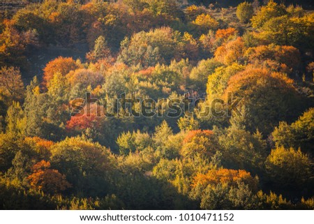 beech forest in autumn, mountain forest in the fall, colored forest in autumn #1010471152