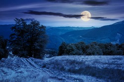 beech forest on the mountain meadow at night. beautiful summer landscape. grass and trees on the hills in full moon light. beauty of transcarpathian nature