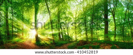 Beech forest panorama and the sun, with bright rays of light beautifully shining through the trees