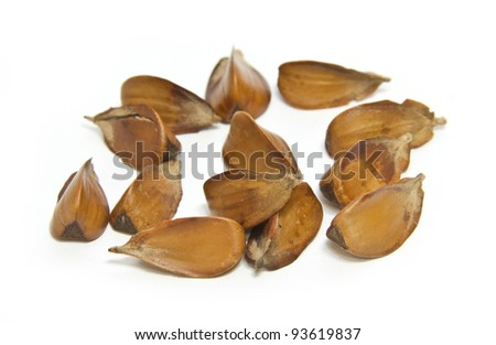 Beech nuts isolated over white background