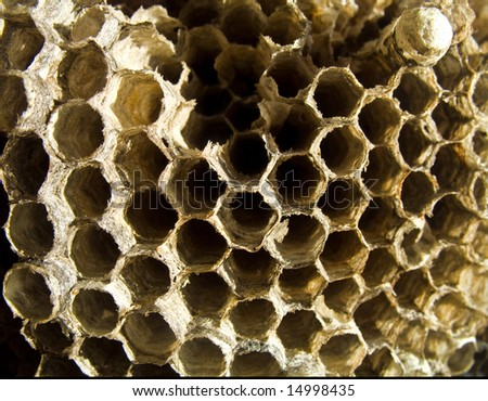 Beehive close up