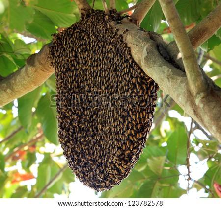 Beehive hangs on a tree