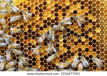 Beehive interior - honey bees working on a honeycomb Сток-фото ©