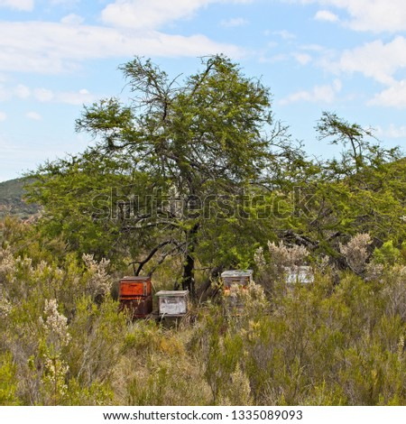 Beehives on a farm in South Africa. Honey production concept image.