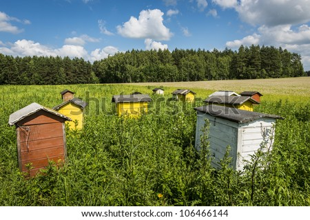 Beehives on ecological field in Poland, Podlasie