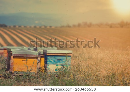 Beehives on the sunflower field in Provence, France. Filtered shot