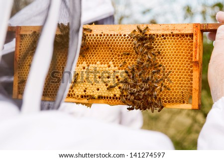 beekeeper at an apiary examining frame from bee hive in summer on a sunny day.