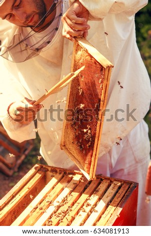 Shutterstock Beekeeper collecting honey selective focus on a honeycomb and bees