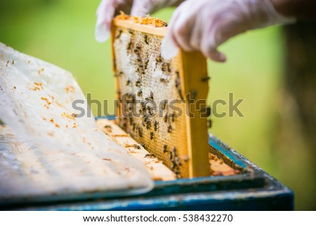 beekeeper collects honey