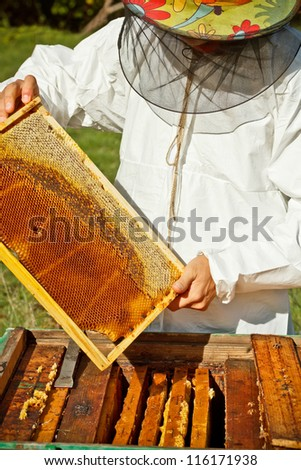 Beekeeper in an apiary holding a frame