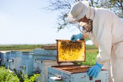 Beekeeper on apiary. Beekeeper is working with bees and beehives on the apiary.