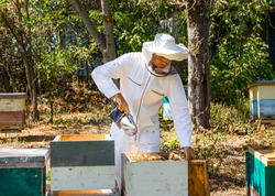 Beekeeper working with smoker in apiary. Frames of a bee hive. Bee smoker is used to calm bees before frame removal.