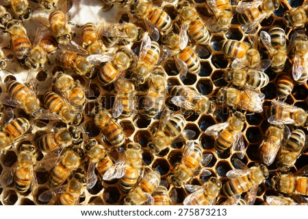Beekeeping at Vietnam, Vietnamese agriculture, group of bee tank, group of beehive in Dalat jungle, honey is nutrition eating, bee working at bee nest