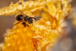 Beekeeping, beekeeper at work, bees in flight