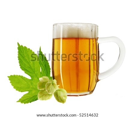 Beer and fresh hops on white background