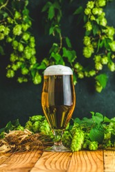 Beer and hop plant. Still life with beer and hop plant in retro style. Glass of cold foamy beer brown bottle of beer and hop on a dark background.