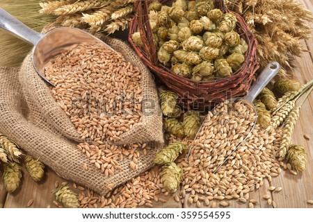 beer ingredients â?? hops, wheat, grain, barley and malt
