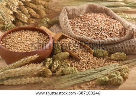 beer ingredients â?? hops, wheat, grain, barley and malt  #387100246