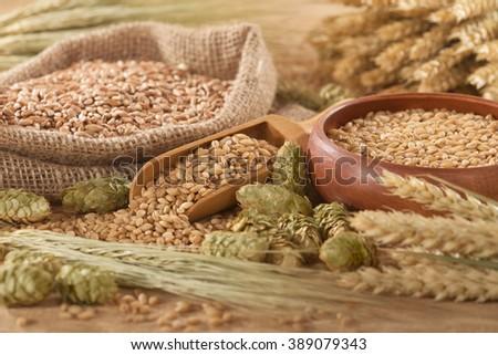 beer ingredients â?? hops, wheat, grain, barley and malt  #389079343