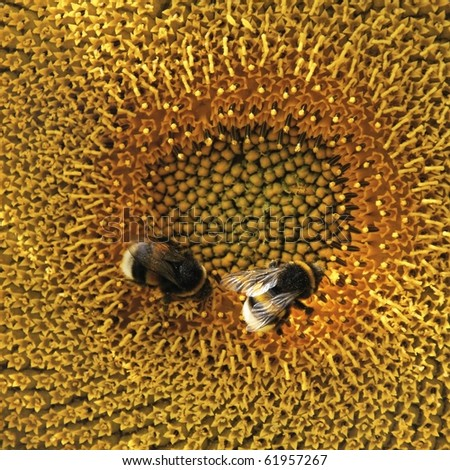 Bees at work - stock photo