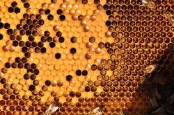 Bees & brood