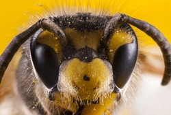 Bees close up face shot. Stack image.