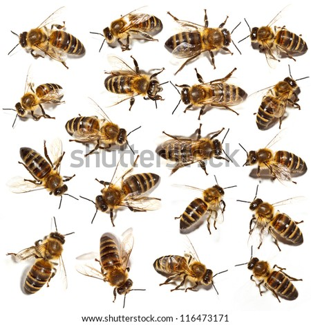 Bees collection on white background - stock photo