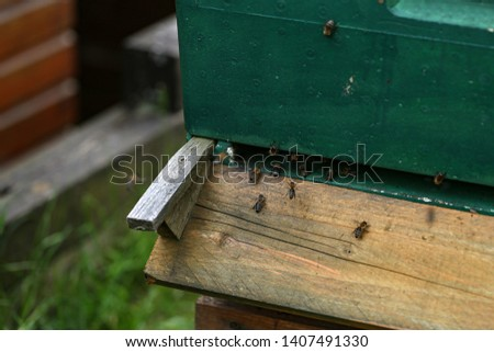 Bees fly out and fly into the hive fly