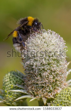 bees insect macro nature animal