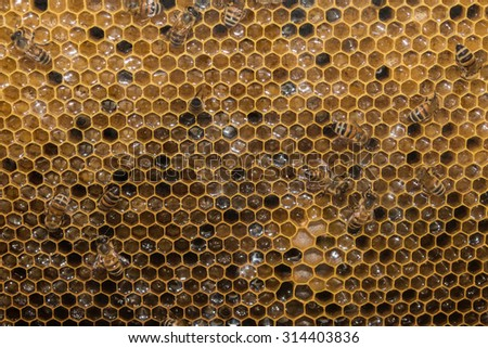 bees inside beehive while making honey detail