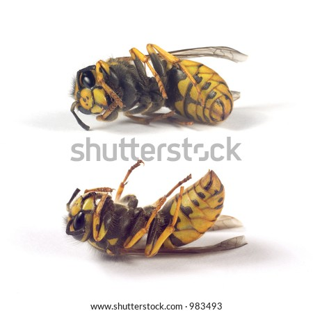 bees isolated