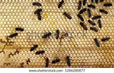 Bees on a honeycomb in the summer #1286280877