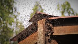 bees swarming hive