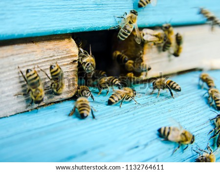 Bees work near the hive