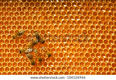 bees work on honeycombs