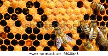 Bees working on honey cells.