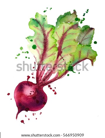 Beet. Beet watercolor with splashes