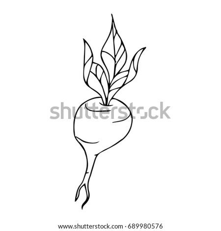 Beet illustration. Doodle style. Design icon, print, logo, poster, symbol, decor, textile, paper, card.