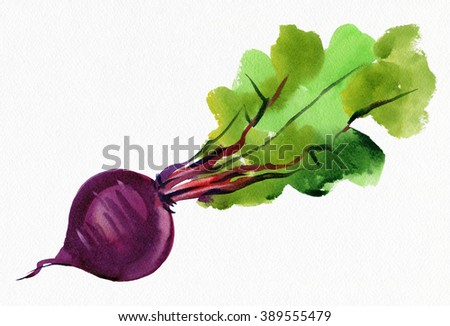 Beet on a white background. Watercolor.