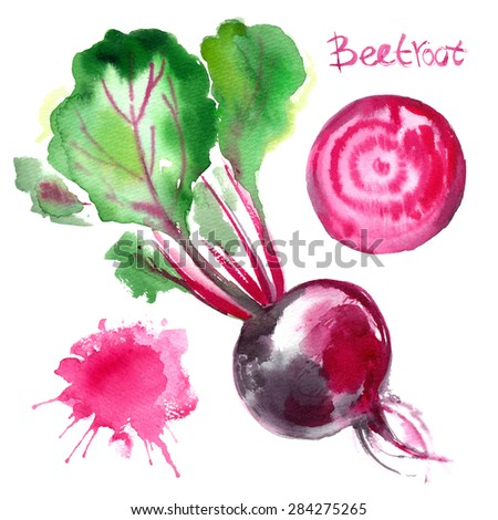 Beet painted with watercolors on white background. Study paints colored beets. Set vegetables and leaves.