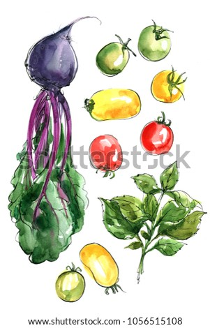Beet rood, colored cherry tomatoes, green basil. Vegetables painted in watercolor on a white background. Colorful sketch of food. Italian food.